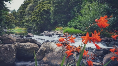 A flowing river with trees, rocks, and orange wild flowers