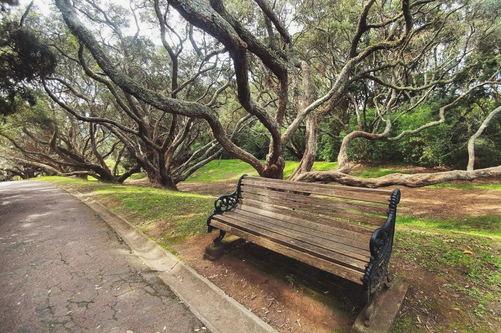 An empty bench in the middle of a park
